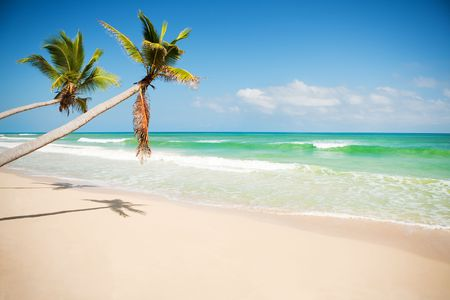 Seashore of Caribbean sea with a palm tree photo