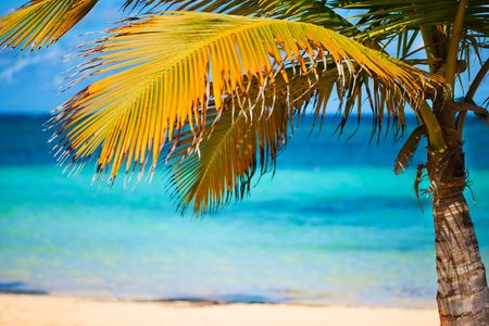 Seashore of Caribbean sea with a palm tree photo