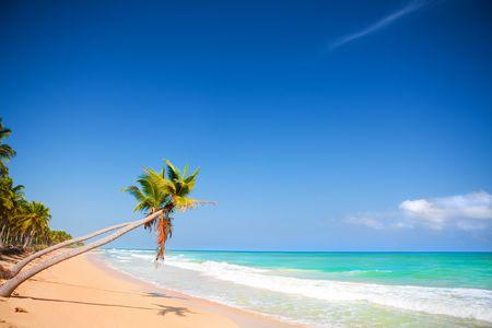 Seashore of Caribbean sea with a palm tree Stock Photo - 6078615