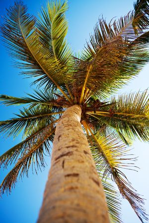Palms and Caribbean sky Stock Photo