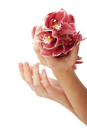 Hands and orchid over isolated white background photo