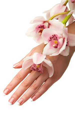 isolated on the white background: Hand and orchid over isolated white background Stock Photo