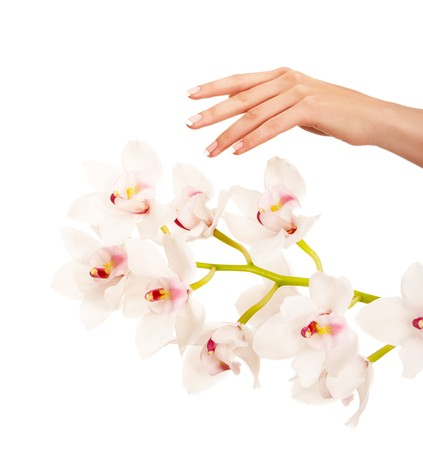 laque: Hand and orchid over isolated white background Stock Photo