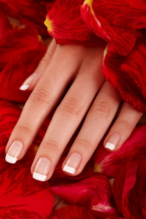 Closeup image of a womans hand in petals of a rose