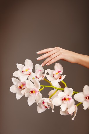 Hand and orchid over isolated grey background