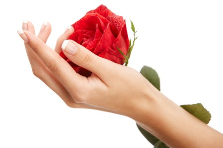 Hand and rose isolated over white background