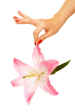 Female hand holding lily over isolated white background Stock Photo - 9944901
