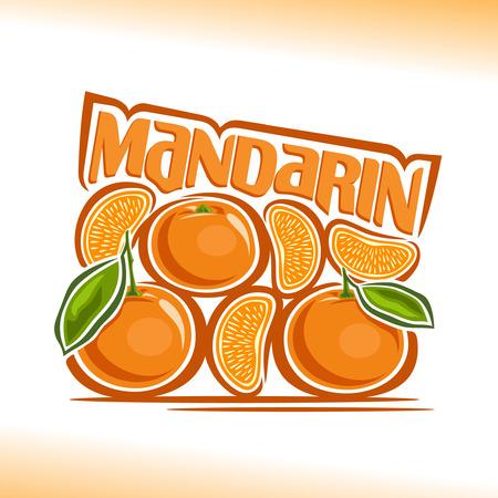 mandarin: Vector illustration on the theme of mandarin Illustration
