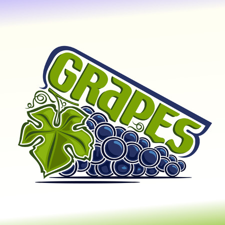 Vector illustration on the theme of grapes