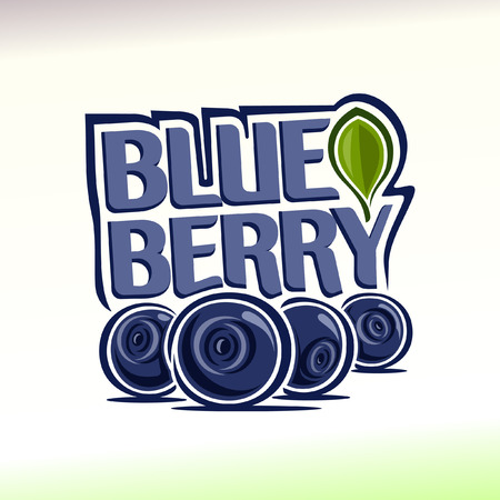 blueberries: Vector illustration on the theme blueberry