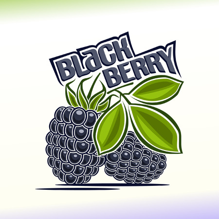 Vector illustration on the theme of blackberry