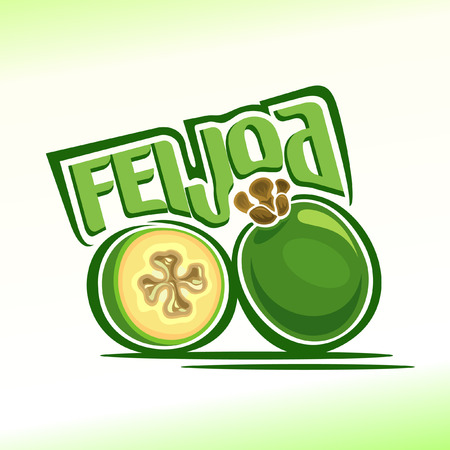 feijoa: Vector illustration on the theme of feijoa