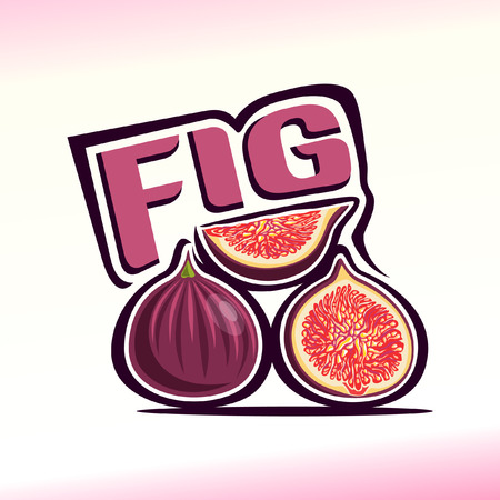 fig: Vector illustration on the theme of fig