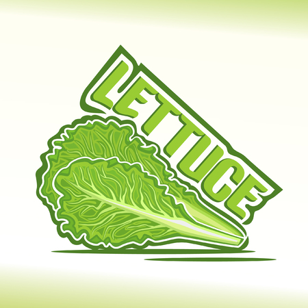 lettuce: illustration on the theme of lettuce Illustration
