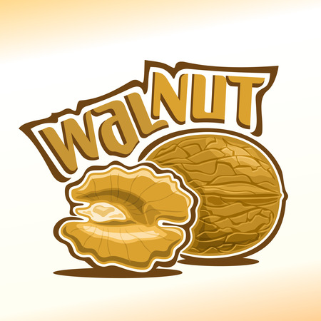 Illustration on the theme for walnut, consisting of nut-in-shell and half of the peeled kernel of the nut Illustration