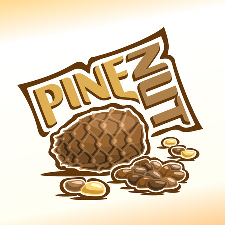 hazel: Illustration on the theme for pine nuts, consisting of a cedar cone, peeled nuts kernel and nutlets in the nutshell Illustration