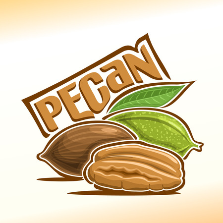 Illustration on the theme for pecan nuts, consisting of peeled half pecan nutlets and two nuts in the nutshell with green leaf