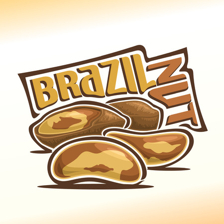 nutshell: Illustration on the theme for brazil nuts, consisting of peeled brazil nutlets and two nuts in the nutshell Illustration