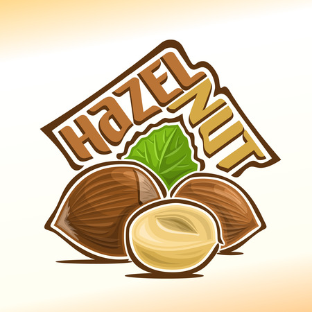 nutshell: Illustration on the theme for hazelnut nuts, consisting of peeled half hazelnut nutlet and two nuts in the nutshell and green leaf in the background Illustration