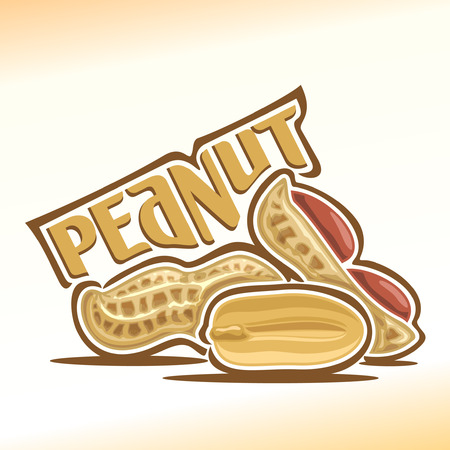 Illustration on the theme for peanut nuts, consisting of peeled half peanut nutlet and two nuts in the nutshell