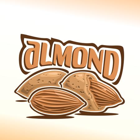 Illustration sur le thème de la noix d'amande, composé de nutlet amandes pelées et deux écrous en bref Vecteurs