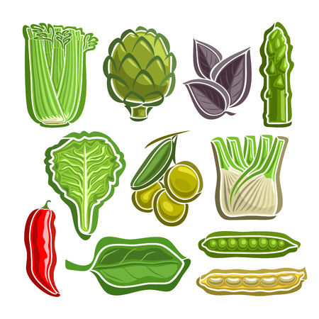 Vector Set Vegetables simple Logo: celery, artichoke, basil, asparagus, lettuce, olives, fennel, chilli, spinach, beans, peas; abstract primitive simplistic vegetables logo or icon, isolated on white. Illustration