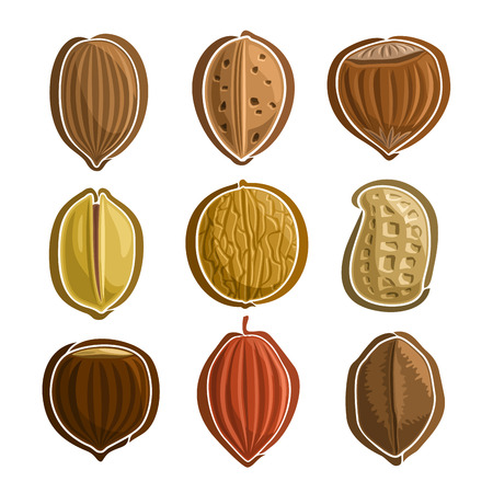 Vector Set Nuts Logo: pecan, almond, hazelnut filbert, pistachio, walnut, peanut groundnut, chestnut, cocoa, brazil nut; abstract primitive simplistic nuts logo or icon, hazel nutlet isolated on white