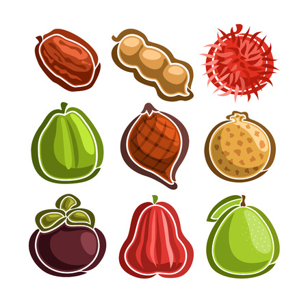 Vecteur série d'icônes exotiques colorées Fruits: 9 logos primitifs de fruits thaïlandais isolés sur fond blanc, ensemble d'autocollants simples de dessin animé pour le jus ou des bonbons, image de pictogrammes graphiques abstraits de fruits