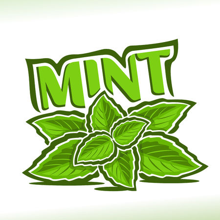 Vector icon for Mint herb, label with green leaves of peppermint, sprig of fresh spearmint, icon with title text - mint for natural products with menthol flavor, twig of mints herbal garnish on white. 일러스트