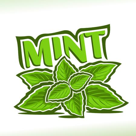 Vector Ikone für tadelloses Kraut, beschriften Sie mit grünen Blättern der Pfefferminz, Zweig der frischen grünen Minze, Ikone mit Titeltext - Minze für Naturprodukte mit Mentholgeschmack, Zweig der Minzenkräuter auf Weiß.