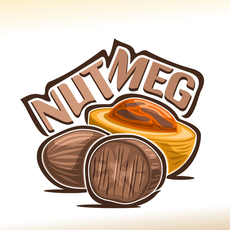 Vector icon for Nutmeg: fresh muscat nut in yellow shell and dry brown edible myristica fragrans, poster for cooking spice with title - nutmeg, label for organic product with nutmeg flavor on white. Illustration