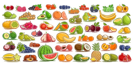 Vector set of fresh Fruits, 49 cut out organic fruits and berries, group of colorful design signs for package of drinks or ice cream, sweet apricot, healthy gooseberry, flat symbols for snack or jam. Stock Vector - 109433879