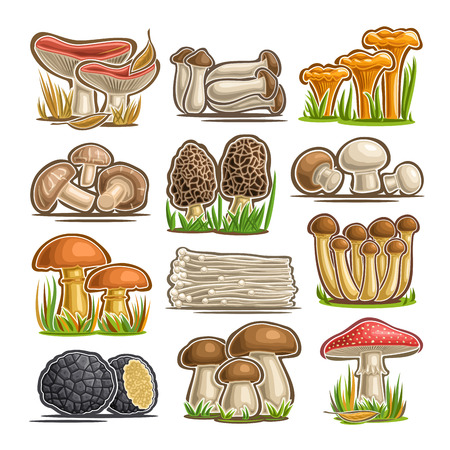 Vector set of eatable Mushrooms, 12 cut out assorted abstract raw fungus for healthy nutrition, collection of isolated various cartoon mushrooms for design label on packaging of frozen food on white.
