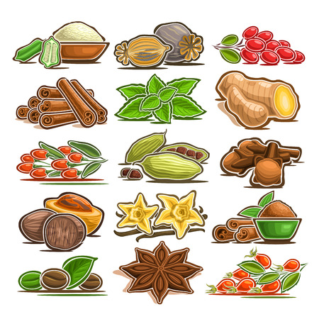 Vector set of indian Spices, 15 cut out assorted abstract condiments for asian cuisine, collection of isolated various cartoon spices for kitchen tags on label of seasoning package on white background Banque d'images - 109434218
