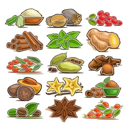 Vektorsatz der indischen Gewürze, 15 herausgeschnittene verschiedene abstrakte Gewürze für asiatische Küche, Sammlung von isolierten verschiedenen Cartoon-Gewürzen für Küchenanhänger auf Etikett des Gewürzpakets auf weißem Hintergrund
