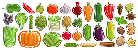 set of Vegetables, group of cut out cartoon indian spices, various minimal design vegetable tags for healthy nutrients, lot collection of agriculture simple icons isolated on white background. 矢量图像