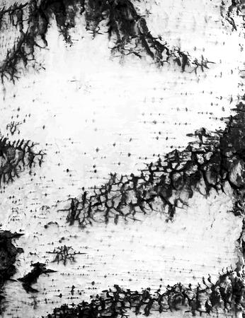 Bark of a birch tree Ilustração