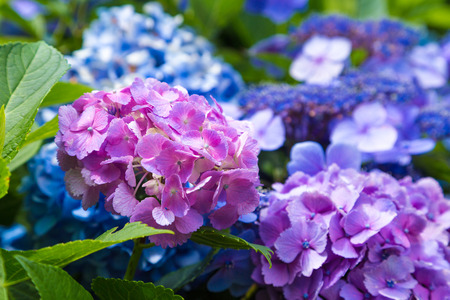Blossoming flowers in summer