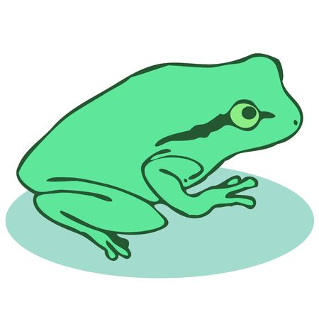 Green frog seen from the side