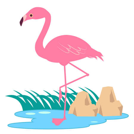 Flamingo illustration standing at the water's edge  イラスト・ベクター素材