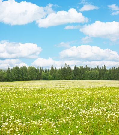 Green meadow blue sky with clouds and edge of forest photo
