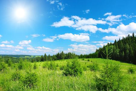 Green meadow with pine trees and blue sky with sun 스톡 콘텐츠