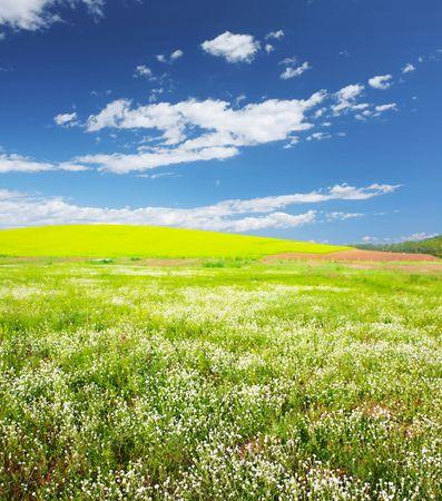 herbs wild: Prado con hierbas silvestres y cielo azul  Foto de archivo