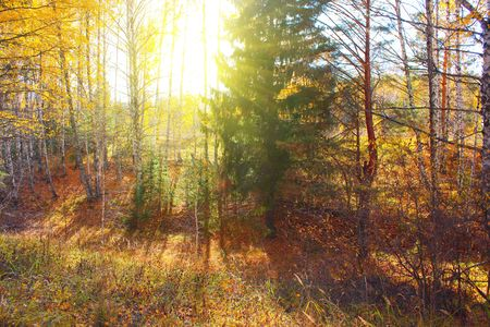 gully: Gully in autumn forest with sunlight