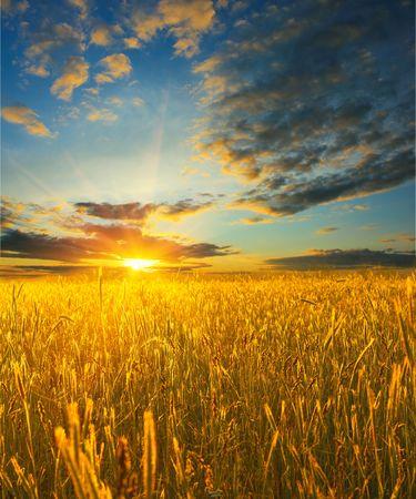 畑に小麦の日の出 写真素材