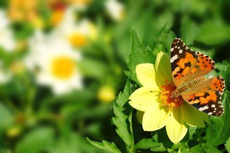 Butterfly on flower photo