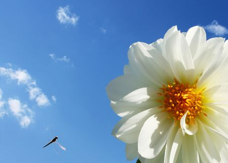 White flower with blue sky and clouds photo