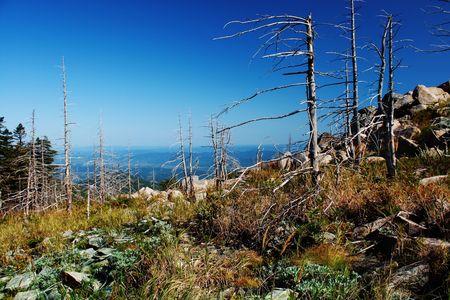 arboles secos: �rboles muertos en las monta�as de la taiga Foto de archivo