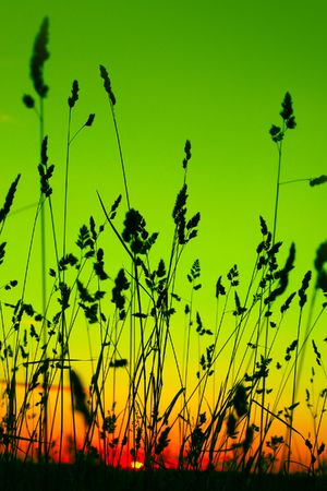 Stems of herbs and abstract green sunrise photo