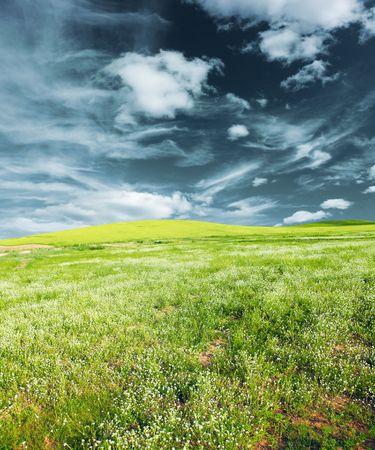 herbs wild: Prado verde con hierbas silvestres  Foto de archivo